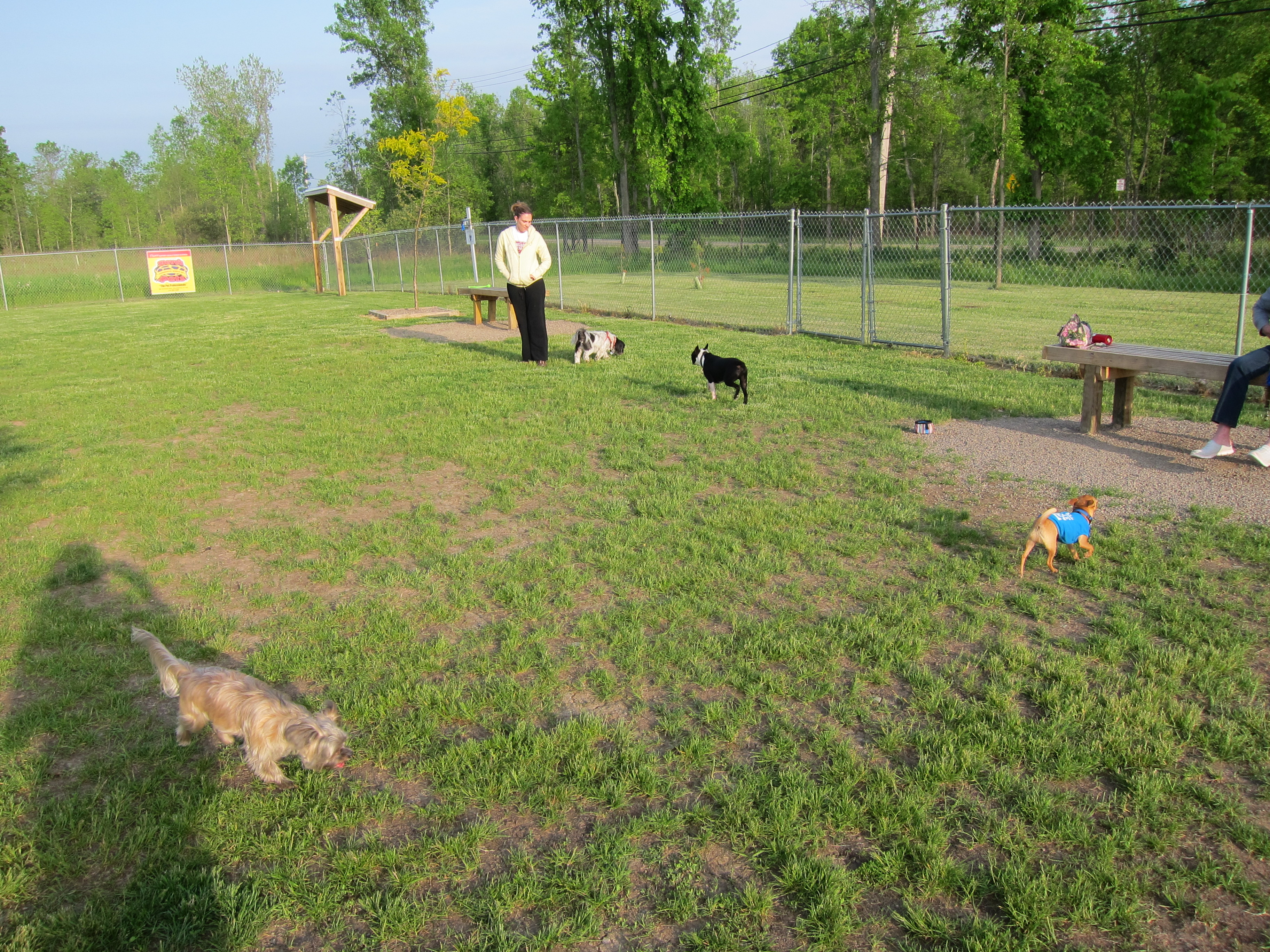 Amherst Dog Park Smith Road